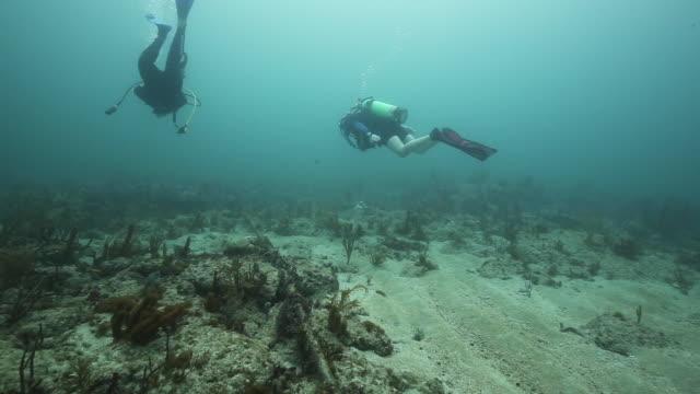Scuba divers swim along ocean floor, underwater shot