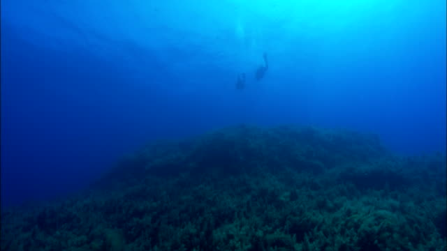 Scuba divers swim amongst fish and sea plants underwater. Available in HD.