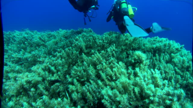 scuba divers swim amongst fish and sea plants underwater. available in hd. - diving flipper stock videos & royalty-free footage