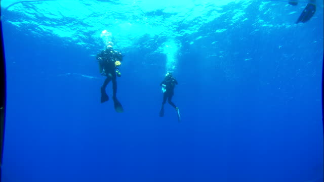 Scuba divers swim back up to the surface. Available in HD.