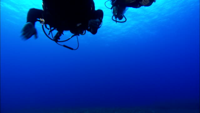 scuba divers swim in the mediterranean sea. available in hd. - diving flipper stock videos & royalty-free footage