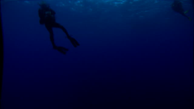 Scuba divers swim in the Mediterranean Sea. Available in HD.