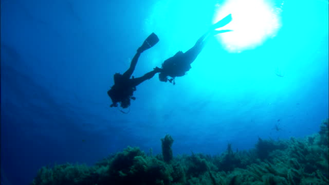 stockvideo's en b-roll-footage met scuba divers swimming over plants in sea available in hd. - zwemvlies