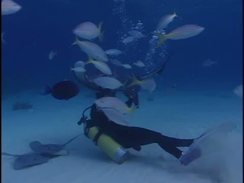 scuba divers swimming with a stingray in the sea - okänt kön bildbanksvideor och videomaterial från bakom kulisserna