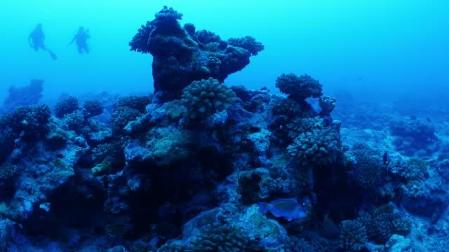 scuba divers swimming with fish near reef in tahiti / moorea, french polynesia - tahiti stock videos & royalty-free footage