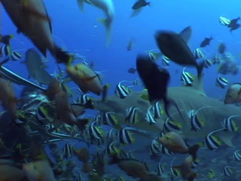 scuba divers under water - tauchgerät stock-videos und b-roll-filmmaterial