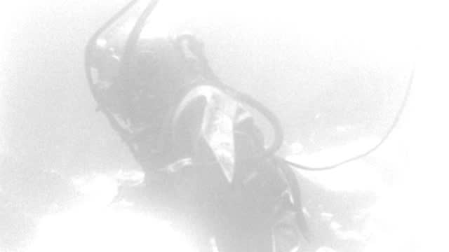 underwater - scuba divers underwater - a diver forward and across r to l - pan with him - light shows - scene pretty light - b&w. - aqualung diving equipment stock videos & royalty-free footage