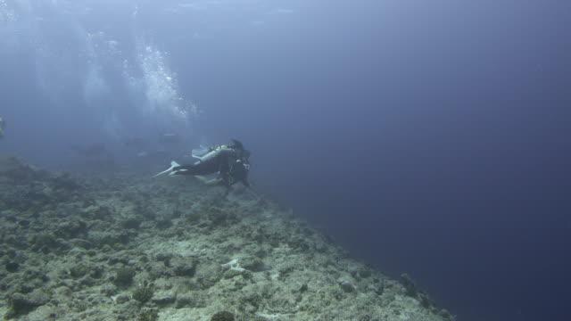 scuba divers underwater, palau - deep sea diving stock videos & royalty-free footage