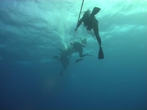 vídeos de stock e filmes b-roll de mergulho-quedismo (em queda livre) - corda