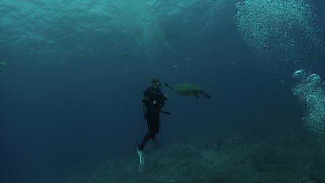 scuba divers - goggles sportswear stock videos and b-roll footage