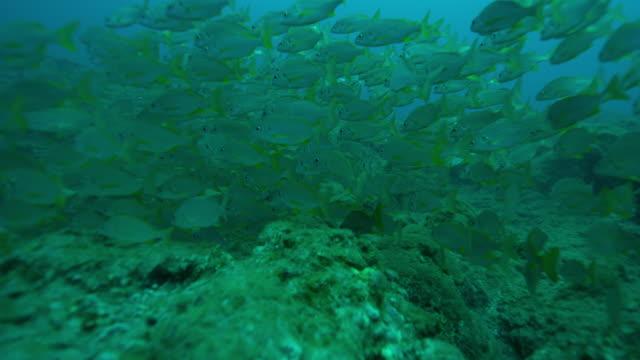 vidéos et rushes de scuba divers - océan atlantique