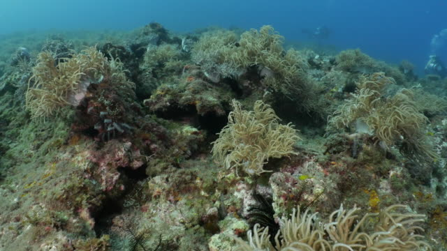 scuba diving at undersea soft coral reef, taiwan - soft coral stock videos & royalty-free footage