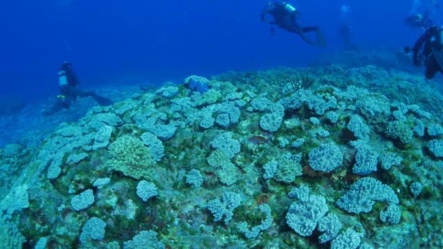 Tauchen im Korallenriff, Japan