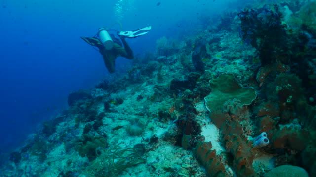 在珊瑚礁中的水肺潛水 - 太平洋 個影片檔及 b 捲影像