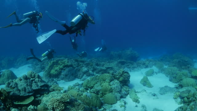 Scuba diving in coral reef