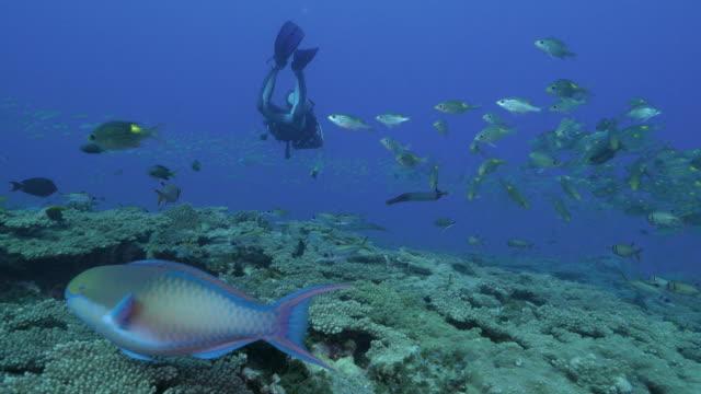 Tauchen im Korallenriff mit einer Schule des Fisches