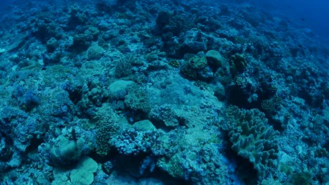 深い海の底でリーフでスキューバ ダイビング - 野生生物保護点の映像素材/bロール
