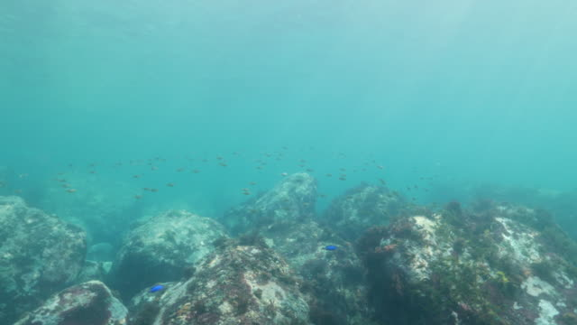 scuba diving in sub-tropical sea - subtropical climate stock videos and b-roll footage