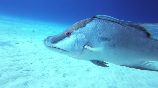 scuba diving in the cayman islands is a spectacular experience. the waters are crystal clear and the animal life is beyond beautiful. white sand... - aqualung diving equipment video stock e b–roll