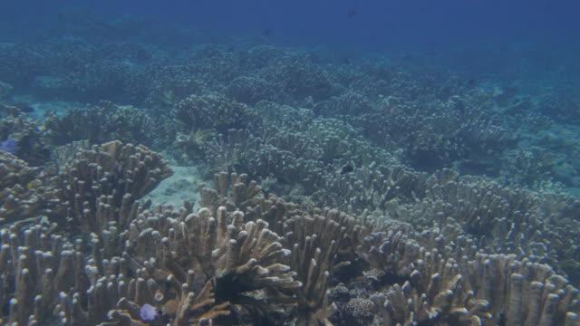 熱帯の海でスキューバ ダイビング - ソフトコーラル点の映像素材/bロール