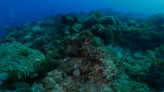 Scuba diving in undersea coral reef