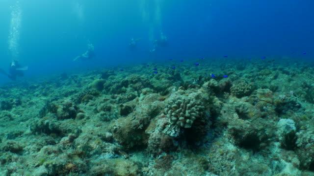 Scuba diving in undersea reef