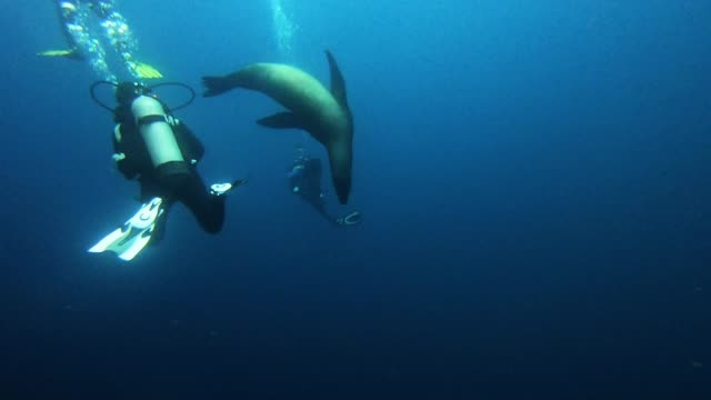 vídeos de stock e filmes b-roll de scuba diving is a relatively new sport. it was only since the turn of the twentieth century that man has been able to produce equipment that allows a... - aqualung diving equipment