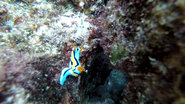 scuba diving is a sport that is unlike anything else on earth. the adventurous few strap on tanks of pressurized air that allow them to slip beneath... - aqualung diving equipment stock videos & royalty-free footage