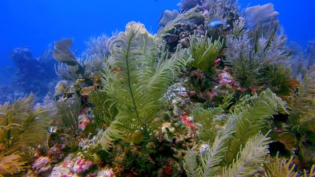 scuba diving on coral reef in caribbean sea near akumal bay - riviera maya / cozumel , quintana roo , mexico - akumal stock videos and b-roll footage
