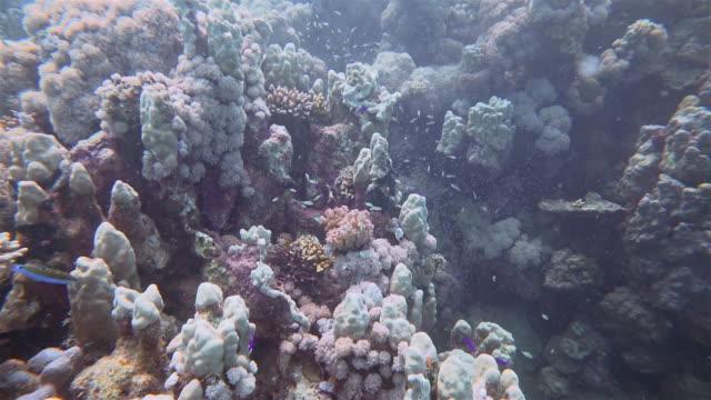 dykning på korallrev på marsa alam/röda havet-egypten - dykarperspektiv bildbanksvideor och videomaterial från bakom kulisserna