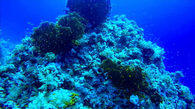 Scuba diving on coral reef on Marsa Alam / Red Sea - Egypt