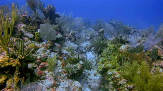 scuba diving on great maya reef in caribbean sea near akumal bay - riviera maya / cozumel , quintana roo , mexico - akumal stock videos and b-roll footage