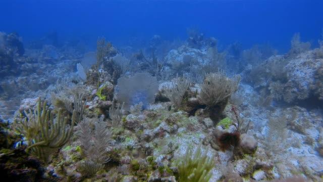 scuba diving on great maya reef in caribbean sea near akumal bay - riviera maya / cozumel , quintana roo , mexico - mayan riviera stock videos and b-roll footage