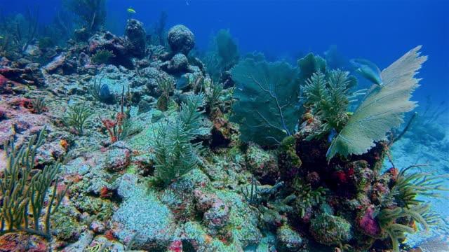 scuba diving on great maya reef in caribbean sea near akumal bay - riviera maya / cozumel , quintana roo , mexico - mayan riviera stock videos & royalty-free footage