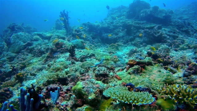 scuba diving on maldives / south ari atoll - ari atoll stock videos & royalty-free footage