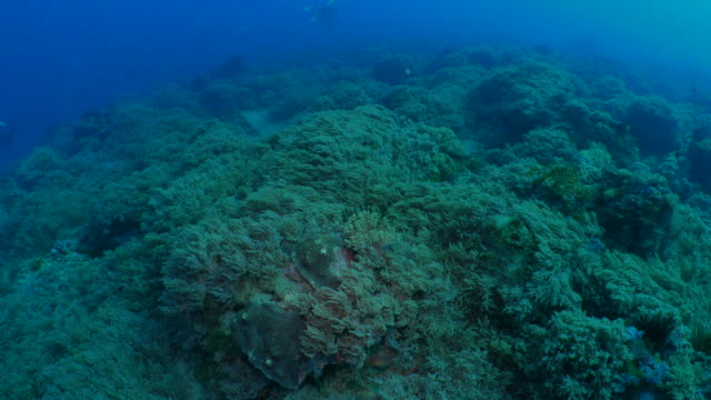 scuba diving on soft coral grassland undersea - seabed stock videos & royalty-free footage