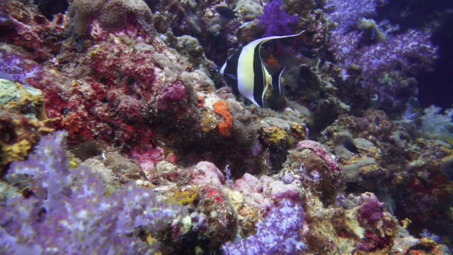 Scuba diving over healthy coral reef first person point of view