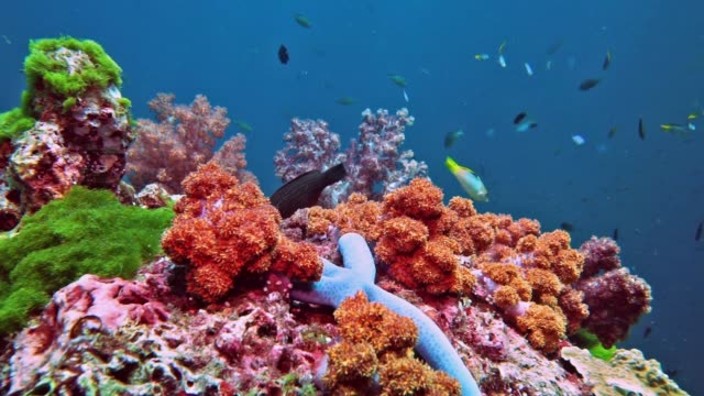 scuba diving point of view over pristine coral reef of red alcyonarian soft coral, hin deang, thailand - undersea stock videos & royalty-free footage