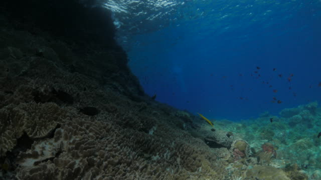 Scuba diving, rock, undersea reef, Indonesia