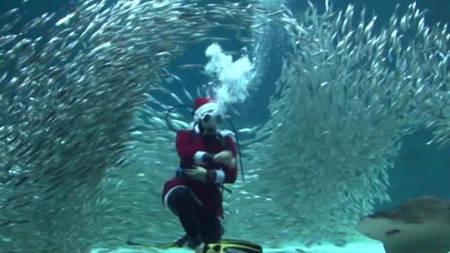 scuba diving santa pays a visit to an aquarium in seoul - aqualung diving equipment video stock e b–roll