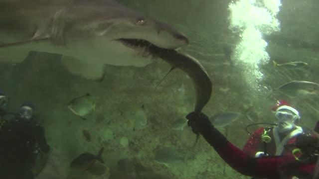 scuba diving santas feed tasty treats to sharks and stingrays at an australian aquarium. sydney, australia. - aqualung diving equipment video stock e b–roll