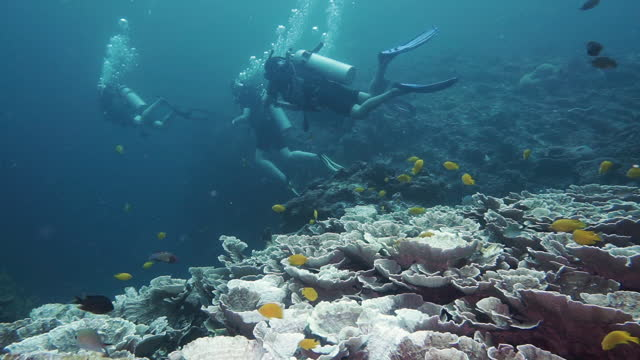 scuba diving staycation for friends in andaman sea thailand - andaman sea stock videos & royalty-free footage