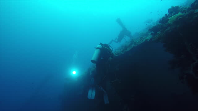 scuba diving through ship wreck and around marine life - medium group of animals stock videos & royalty-free footage