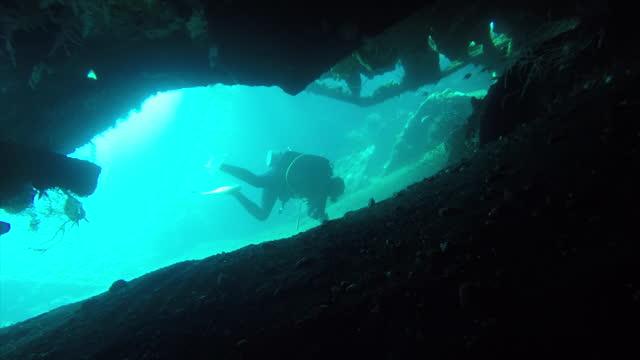 stockvideo's en b-roll-footage met duiken door scheepswrak en rond het zeeleven - zwemvlies