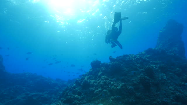 Scuba diving through the coral reef