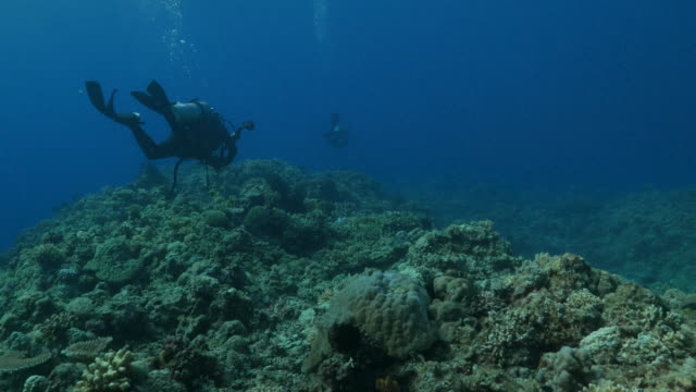Scuba diving trip in Apo Reef, Philippines (4K)