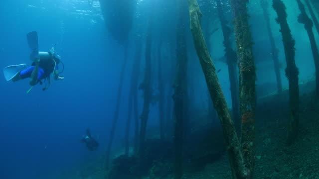 stockvideo's en b-roll-footage met duiken onder houten visserij pier (pier) - scubaduiken