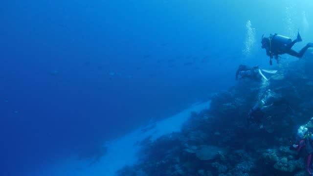 スキューバ ダイビング、海中のサンゴ礁、パラオ