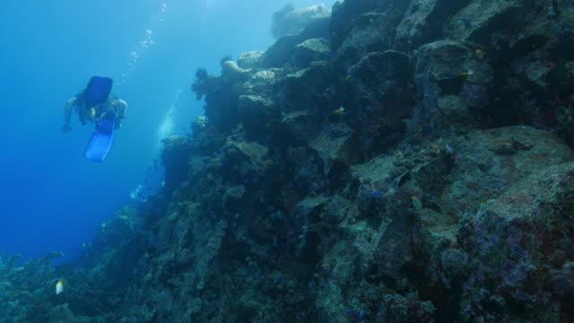 Scuba diving undersea