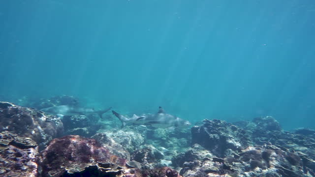 scuba diving with several reef sharks - animal fin stock videos & royalty-free footage